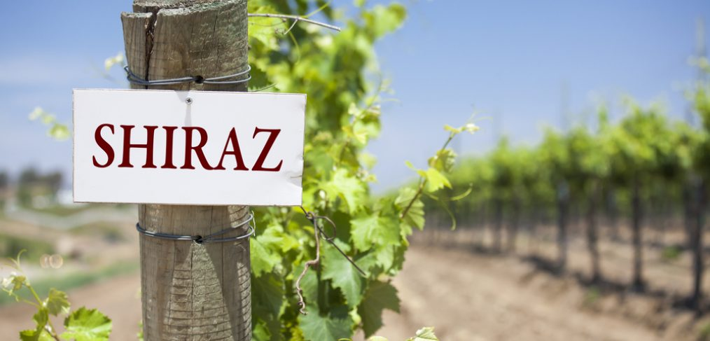 The Shiraz sign on a post in a vineyard.