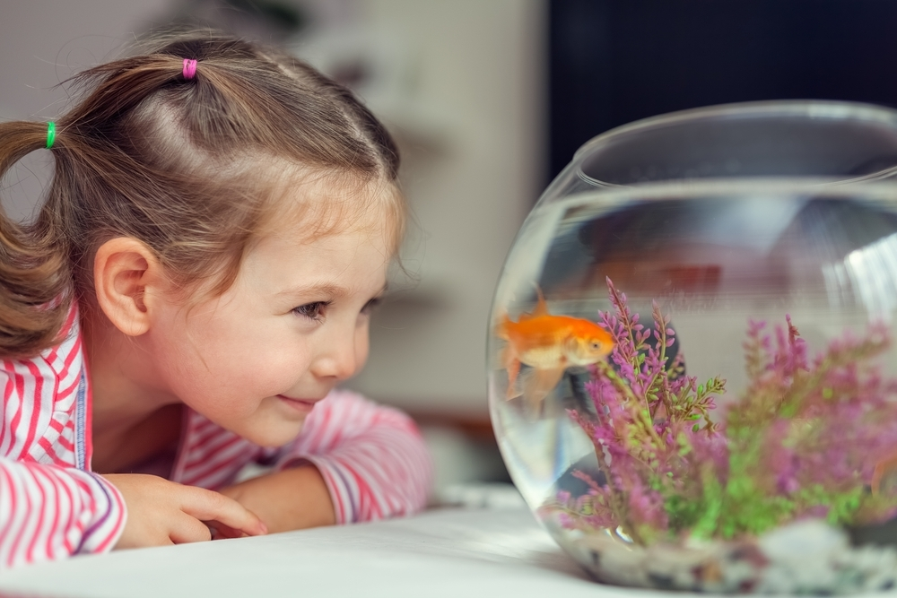 Little girl playing with her pet fish.