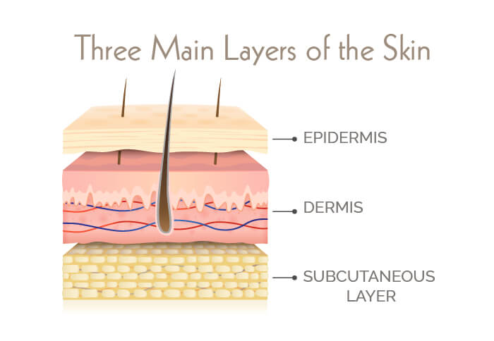 Infographic on the three main layers of the skin