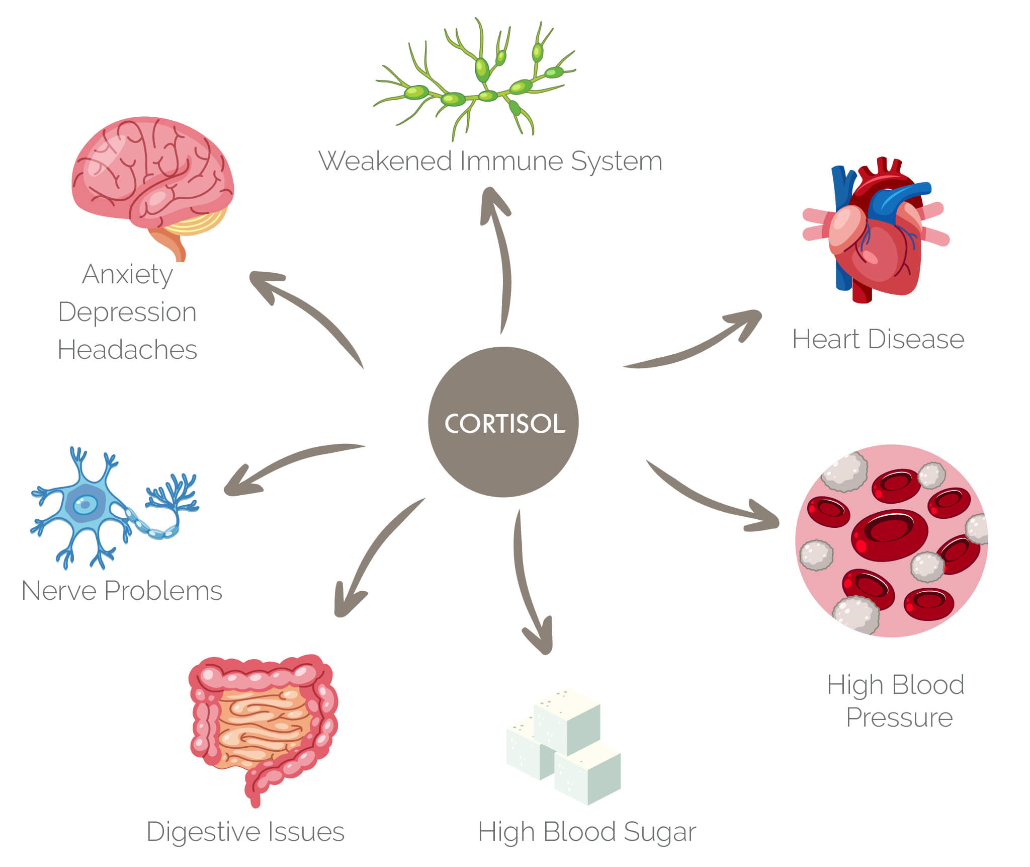 Infographic on cortisol and the stress response system