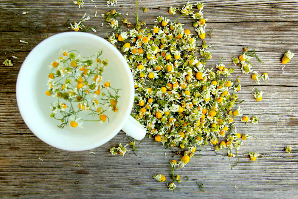 Cup of chamomile in water surrounded by loose chamomile flowers