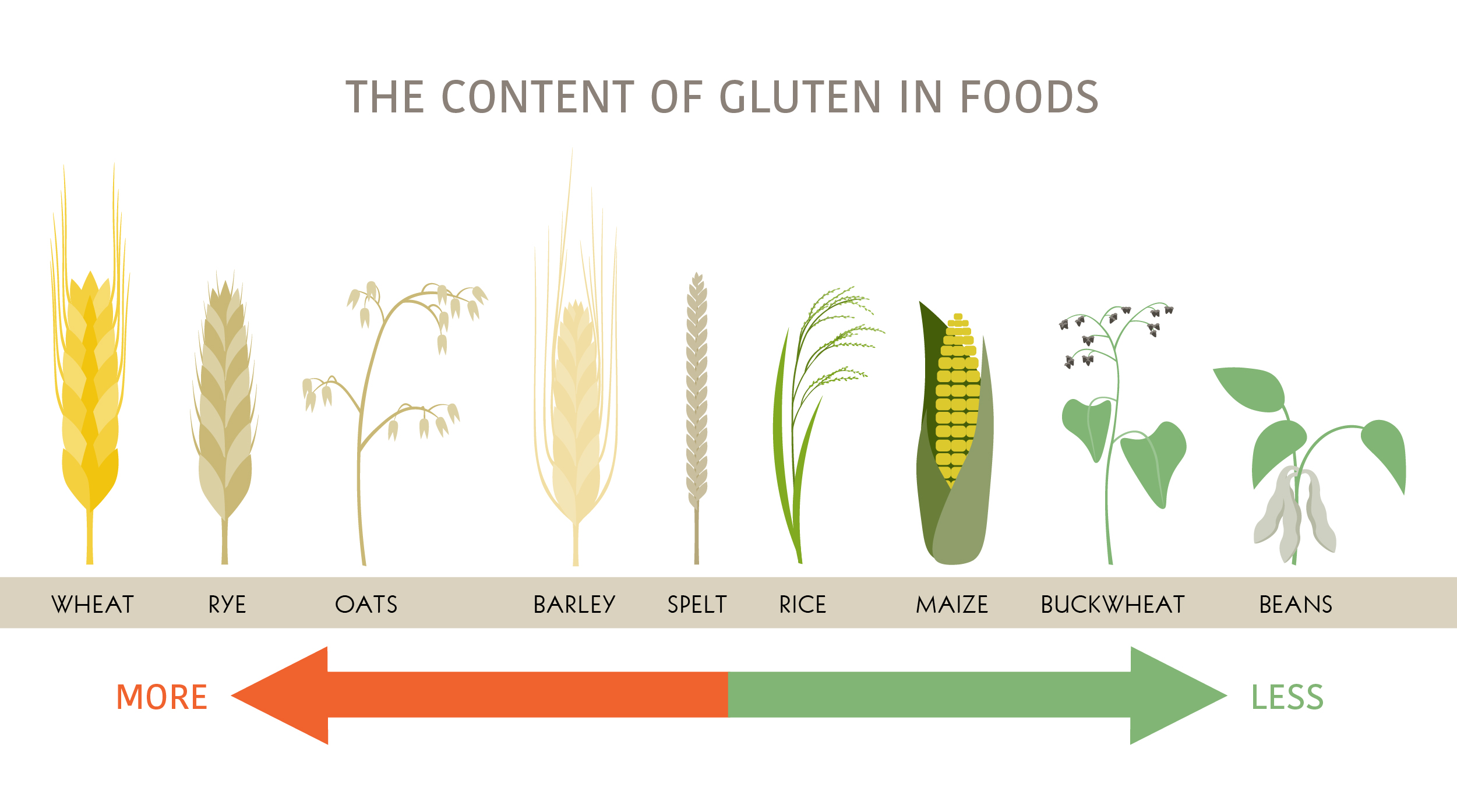 Infographic on the content of gluten in different foods