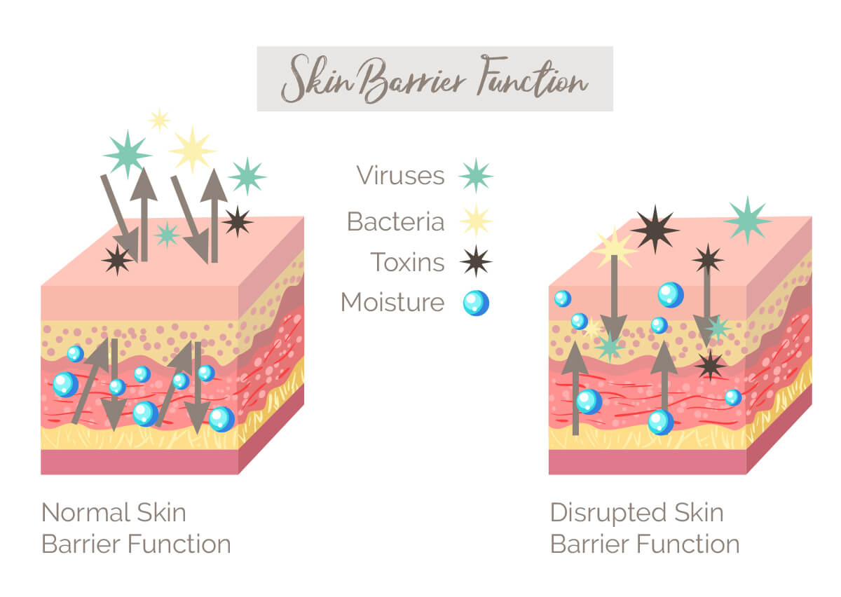 Infographic on skin barrier function
