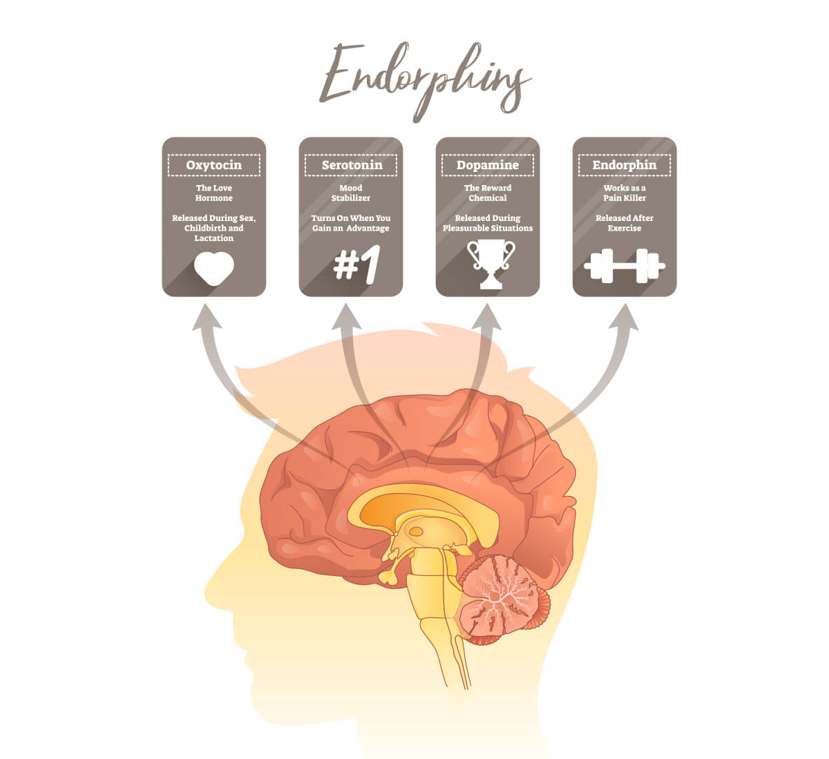 Infographic on endorphins